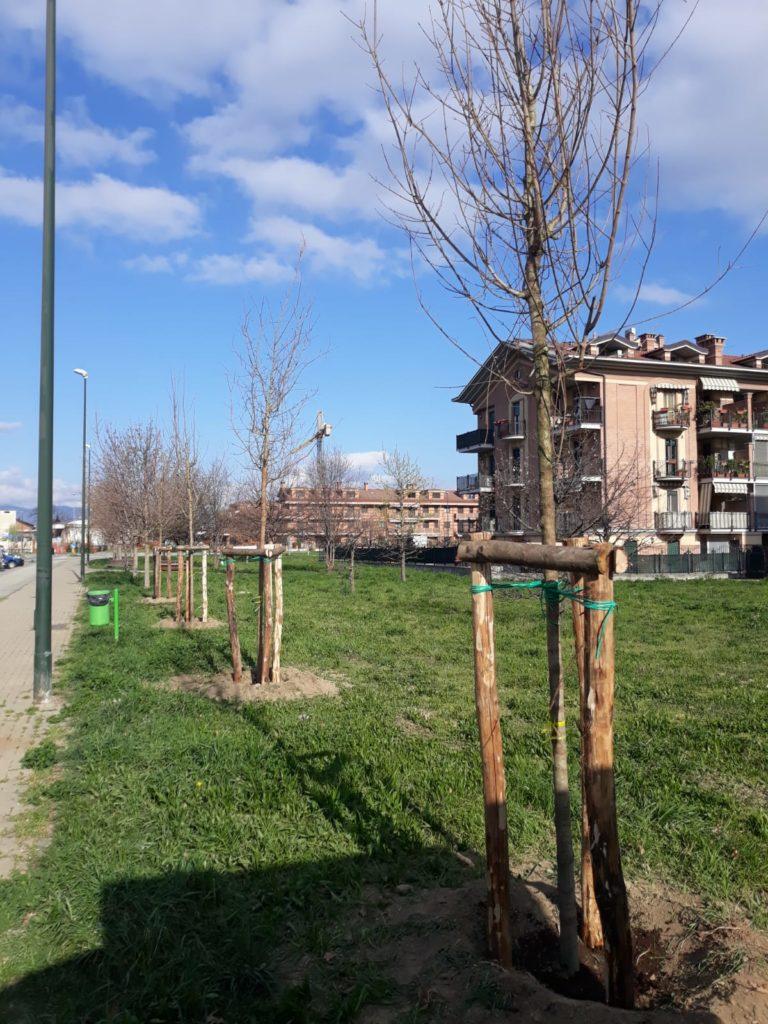 Più piante nelle aree verdi - Rivalta informa di blog